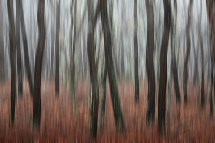Trees in Forest Mist